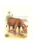 Palaeozoology  Eocene Period  Extinct Animals  Heptodon  Illustration by Wayne Ford