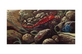 Prehistoric Crustacean  Underwater View  Illustration