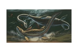 Prehistoric Marine Animals  Underwater View  Illustration