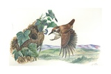 Eurasian Wren Troglodytes Troglodytes at Nest  Illustration