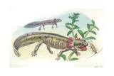 Salamander Tadpole Catching Insects in Water  Illustration