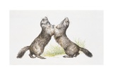 Two Alpine Marmots (Marmota Marmota) Standing  Illustration