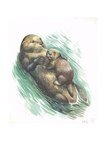 Sea Otter Enhydra Lutris Resting with Cub in Water  Illustration
