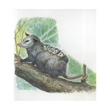 Virginia Opossum Didelphis Virginiana Carrying Cubs on Back  Illustration