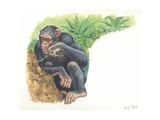 Chimpanzee Pan Troglodytes Fishing for Termites  Illustration