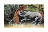 Illustration Representing Tiger Attacking Bovid