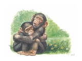 Young Chimpanzees Pan Troglodytes Playing  Illustration