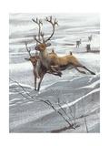 Reindeer (Rangifer Tarandus)  Illustration
