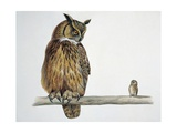 Close-Up of an Eurasian Eagle Owl Perching on a Branch with an Eurasian Pygmy Owl