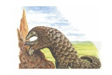 Giant Pangolin Manis Gigantea Catching Ants  Illustration