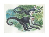 White-Headed Capuchins Cebus Capucinus Jumping in Trees  Illustration