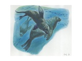 South American Sea Lions Otaria Flavescens or Byronia with Pups in Water  Illustration