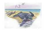 Leatherback Sea Turtle Dermochelys Coriacea  Illustration