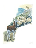 Llama Lama Glama Guarding Flock of Sheep  Illustration