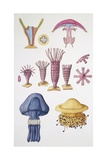 Large Group of Cnidarians  Illustration