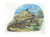 Iguana and Giant Tortoise  Illustration