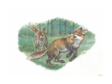 Red Foxes Vulpes Vulpes in Forest  Illustration