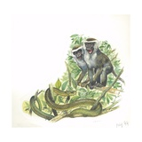 Vervet or Green Monkeys Giving Alarm Calls to Signal the Presence of Snake