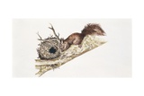 Eurasian Red Squirrel (Sciurus Vulgaris) Sitting in Tree with Nest  Illustration