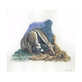 Giant Anteater Myrmecophaga Tridactyla Catching Ants  Illustration