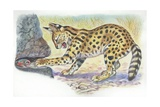 Serval Felis Serval Catching Reptile  Illustration