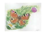 European Peacock Butterfly Inachis Io  Illustration