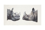 Rhinoceros Heads  Black Rhinoceros (Diceros Bicornis) and Rhinoceros (Genus)  Illustration