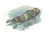 Sea Otter Enhydra Lutris Sleeping in Water  Illustration