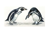 Birds: Sphenisciformes  Humboldt Penguin (Spheniscus Humboldti) Couple  Illustration