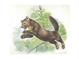 European Pine Marten Martes Martes Jumping  Illustration