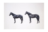 Hannover Horse and Holstein Horse (Equus Caballus)  Illustration