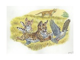Serval Felis Serval with Cubs Chasing Bird  Illustration
