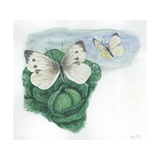 Large Whites or Cabbage Butterflies Pieris Brassicae  Illustration