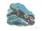 Sea Otter Enhydra Lutris Holding Sea Urchin Underwater  Illustration