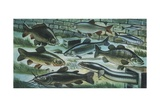 Freshwater Fishes in River  Illustration