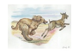 Afghan Hound Canis Lupus Familiaris Chasing Goat  Illustration