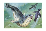Close-Up of a Leopard Seal Hunting a Penguin (Hydrurga Leptonyx)