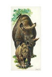 White Rhinoceros Ceratotherium Simum with a Young  Illustration