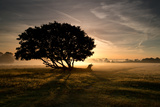 A Solitary Fallen Live Tree Under a Dramatic Sky on a Misty Morning