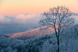Sunrise Casts a Pink Hue on Rime Ice in the Blue Ridge Mountains
