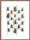 Walking Weevils