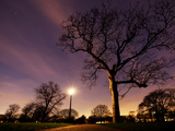 Nightime in Hyde Park  London