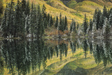 Aspen and Spruce Trees Reflect Autumn Color in Lizard Lake
