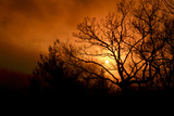 The Setting Sun Seen Through Heavy Cloud Cover and Silhouetted Tree Branches