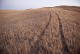 Tire Tracks Through a Field Near Lakeside  Nebraska