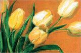 Tulipa Nova