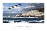 Shore Birds at Point Lobos