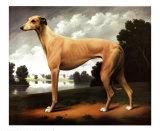 Greyhound dans un paysage à Parkland Reproduction d'art par Christine Merrill