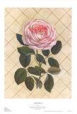 Trellis Rose I
