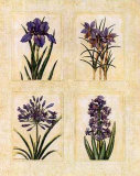 Antique Lavender I